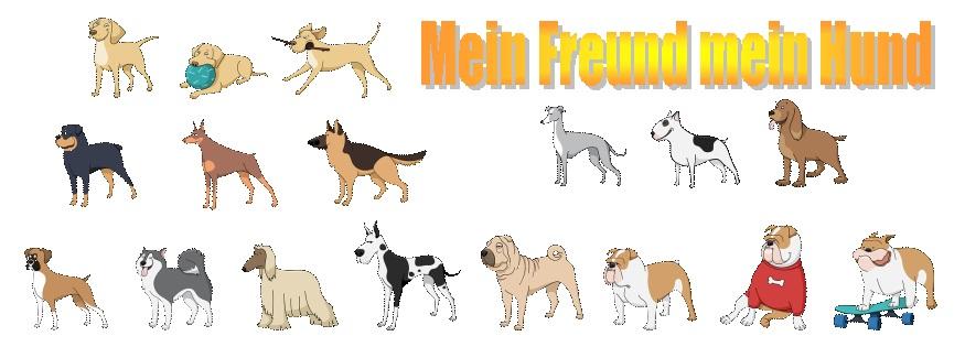 hund und mensch gemeinsam